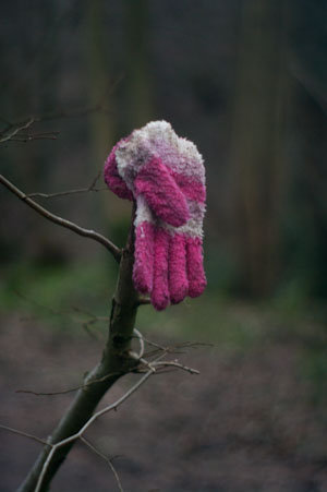 glove on branch
